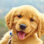 Beneficios en el desarrollo de la mascota con el mejor pienso para perros